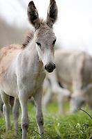 Donkeys<br /> St. John<br /> US Virgin Islands