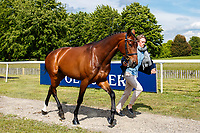 SWE-Ludwig Svennerstal presents Magnolia II during the First Horse Inspection for the CCI-L2* Section D.  2019 GBR-Saracen Horse Feeds Houghton International Horse Trial. Wednesday 22 May. Copyright Photo: Libby Law Photography