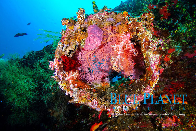 Coral encrusted funnel on the wreck of the USS Liberty off the East Coast of Bali, Indonesia, Pacific Ocean