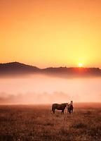 Horses at sunrise. Near Monroe, Oregon.