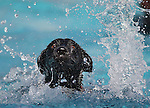 Tulia enjoys the third annual Pooch Plunge at the Carson Aquatic Facility in Carson City, Nev., on Saturday, Sept. 17, 2011. The event, which raises money for Parks 4 Paws, continues Sunday with sessions at 9 a.m., 11 a.m. and 1 p.m..Photo by Cathleen Allison