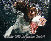 REALISTIC ANIMALS, REALISTISCHE TIERE, ANIMALES REALISTICOS, dogs, paintings+++++SethC_Karma_IMG_2644rev,USLGSC39,#A#, EVERYDAY ,underwater dogs,photos,fotos ,Seth