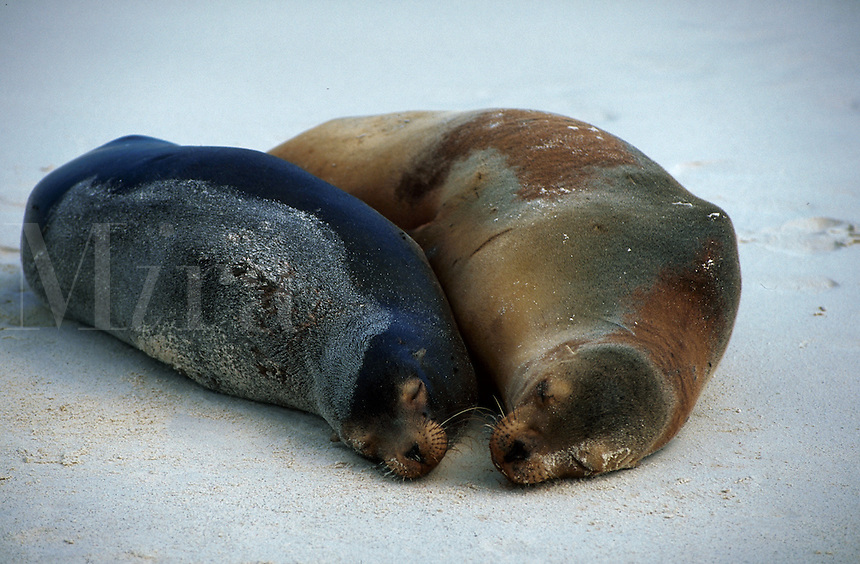 Two sea lions.
