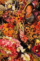 07/01/09 -  Flower booth sales girls set-up in Uptown Charlotte, North Carolina.Patrick Schneider Photo.Com