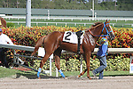 July 12, 2014: 2 year old Like a Queen (FL) with jockey Edgard Zayas on board breaks her maiden by passing favorite What's Up Kiddo at Gulfstream Park in Hallandale Beach FL.  Takes her own route to the winner's circle, Like a Queen. Liz Lamont/ESW/CSM