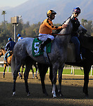 Tap it Rich with Mike Smith aboard in the post parade for an allowance at Santa Anita Park in Arcadia, California on February 13, 2014. (Zoe Metz/ Eclipse Sportswire)