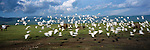 Cattle egrets fly by cape buffalo in Ngorongoro Crater in Tanzania.