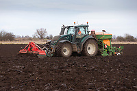 11/1/2021 Drilling Winter Wheat following sugar beet in Cambridgeshire <br /> ©Tim Scrivener Photographer 07850 303986<br />      ....Covering Agriculture In The UK....
