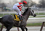 29 November 2008: Ramon Dominguez gallops out on Old Fashioned following an easy wire to wire victory in the grade 2 Remsen Stakes at Aqueduct Racetrack in Ozone Park, New York.
