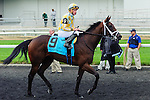 Dixie Twist(9) with Jockey Gary Boulanger aboard after the Natalma Stakes at Woodbine Race Course in Toronto, Canada on September 13, 2014 with Jockey Patrick Husbands aboard.