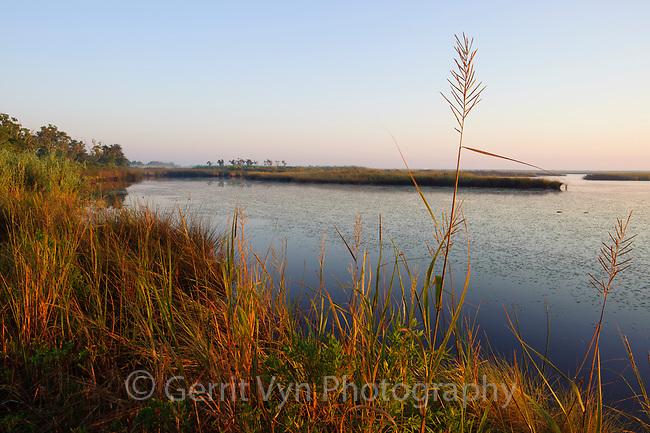 Tidal marsh at Audubon's Paul J. Rainey Sanctuary. Vermilion Parrish, Louisiana. December.