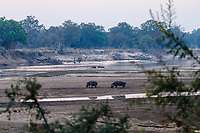 africa, Zambia, South Luangwa National Park,  Luangwa river at the dusk landscape