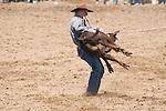 A cowboy flips a calf during calf roping. Jordan Valley Big Loop Rodeo, Ore.
