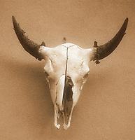 Ghost cow skull - Santa Fe, New Mexico - Sepia