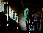 JUNE 06: Channel Maker before the Manhattan Stakes at Belmont Park in Elmont, New York on June 06, 2019. Evers/Eclipse Sportswire/CSM