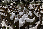 USA, Washington, Seattle, Art Wolfe yard in winter