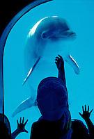 Children wave at dolphin. Sea Life Park, east coast Oahu