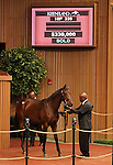 Hip #339 Elusive Quality - Star of Paris filly at the Keeneland September Yearling Sale.  September 11, 2012.