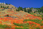 Mount Baker - Snoqualmie National Forest, North Cascades Range, Washington