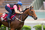 SHA TIN,HONG KONG-APRIL 26: ,Bufferingtrained by Robert Heathcote,exercises in preparation for the Chairman's Sprint Prize at Sha Tin Racecourse on April 26,2016 in Sha Tin,New Territories,Hong Kong (Photo by Kaz Ishida/Eclipse Sportswire/Getty Images)