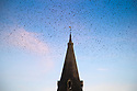 14/02/19<br /> <br /> As the sun sets on the warmest day of the year a murmuration of starlings performs a stunning display above St Peter's Church, Parwich, in the Derbyshire Peak District<br /> <br /> All Rights Reserved, F Stop Press Ltd.  (0)7765 242650  www.fstoppress.com rod@fstoppress.com