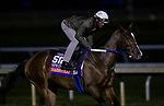 October 30, 2020: Nashville, trained by trainer Steven M. Asmussen, exercises in preparation for the Breeders' Cup Sprint at  at Keeneland Racetrack in Lexington, Kentucky on October 30, 2020. Alex Evers/Eclipse Sportswire/Breeders Cup