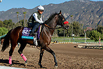 ARCADIA, CA  OCTOBER 25: Breeders' Cup Juvenile Turf entrant War Beast, trained by Doug F. O'Neill, exercises in preparation for the Breeders' Cup World Championships at Santa Anita Park in Arcadia, California on October 25, 2019.(Photo by Casey Phillips/Eclipse Sportswire/CSM)