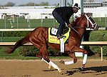 April 20, 2014 Danza and rider Nick Bush gallop at Churchill Downs.  Danza is owned by Eclipse Thoroughbred Partners and trained by Todd Pletcher.  He recently won the Arkansas Derby at Oaklawn Park.