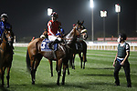 March 27, 2021: SIMSIR (IRE) #3, in the post parade for the Dubai Sheema Classic on Dubai World Cup Day, Meydan Racecourse, Dubai, UAE. Shamela Hanley/Eclipse Sportswire/CSM