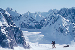 Alaska, Denali National Park, Climbers, telemark skiing, Great Gorge, Don Sheldon Amphitheater, Alaska Range, U.S.A., North America, Note the Climber is approaching Moose's Tooth which is just coming into camera left..
