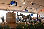 #56 Hip #56, a dark bay or brown colt, sired by Hard Spun, foaled in Kentucky and consigned by Eddie Woods, during the Fasig-Tipton Florida Sale at the Palm Meadows Training Center in Boynton Beach, Florida on March 26, 2012.The final sale price was $870,000. Arron Haggart/Eclipse Sportswire.