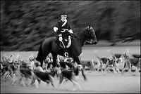 Europe/France/Centre/41/Loir-et-Cher/Sologne/Cheverny: Château de Cheverny: Départ pour la chasse à courre, les piqueux en tenue et à cheval avec la meute d'une centaine de chiens  Auto Cavalier N°: 2012-4105  //  France, Loir et Cher, Chateau de Cheverny, classic architecture, hunting with hounds, huntsmen, hounds and horses - whippers who manage the pack of 90 dogs for hunting