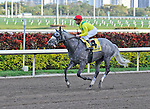 06 February 2010:  Never On Sunday with jockey Joe Bravo in the The Gulfstream Park Handicapp Stakes the Ninth race at Gulfstream Park in Hallandale Beach, FL.