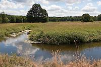 Naturnaher Wiesenbach, Wiesen - Bach mit üppiger Ufervegetation, Hochstaudenflur, bewachsen mit Flutendem Wasser-Hahnenfuß, Wasserhahnenfuß, Wasser - Hahnenfuß, Ranunculus fluitans