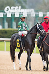February 17, 2020: Chase Tracker (6) with jockey John Velazquez aboard during the Southwest Stakes at Oaklawn Racing Casino Resort in Hot Springs, Arkansas on February 17, 2020. Ted McClenning//Eclipse Sportswire/CSM