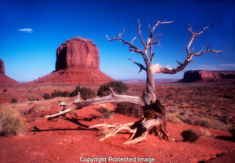 Mesa and Tree