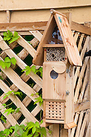 Wildlife in the garden, wooden insect house on trellis