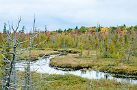 Early autumn tree color near a winding stream and cedar swamp. Southern Marquette County, Michigan