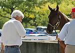 Hip #131 Distorted Humor - Mushka filly being inspected by trainer Bob Baffert at the  Keeneland September Yearling Sale.  September 9, 2012.