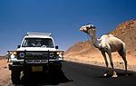 EGY, Aegypten, Sinai: Jeep und Dromedar | EGY, Egypt,  Sinai: Jeep and Dromedary
