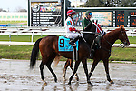 NEW ORLEANS, LA - JANUARY 21:<br />  Granny's Kitchen ridden by Miguel Mena in the post parade before the Colonel E.R. Bradley Handicap at the Fairgrounds Race Course on January 21,2017  in New Orleans, Louisiana. (Photo by Steve Dalmado/Eclipse Sportswire/Getty Images)