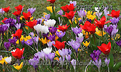 Gisela, FLOWERS, photos+++++,DTGK1994,#f#