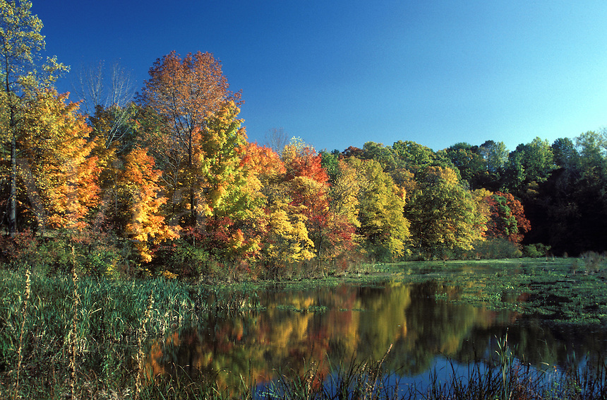 Fall Season. Fall and changing of leaves. Fall season and lake.