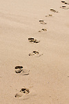 Cabo San Lucas, Mexico; footprints in the sand by the Pacific ocean , Copyright © Matthew Meier, matthewmeierphoto.com All Rights Reserved