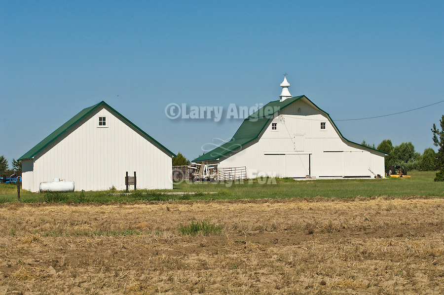 White barn with green roof, cupola with weather vane Mirror D Farm, rural Kansas