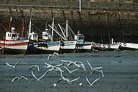 """Europe/France/Bretagne/22/Cotes d'Armor /Erquy: Principal port de pèche à la coquille Saint Jacques """"Coquillers"""" bateaux de pèche à la coquille Saint Jacques"""