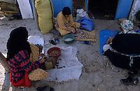 """Afrique/Maghreb/Maroc/Env d'Essaouira : Coopérative """"Ajdigue Tidzi"""", les femmes enlèvent la pulpe des fruits pour extraire l'amande et faire l'huile d'Argan"""