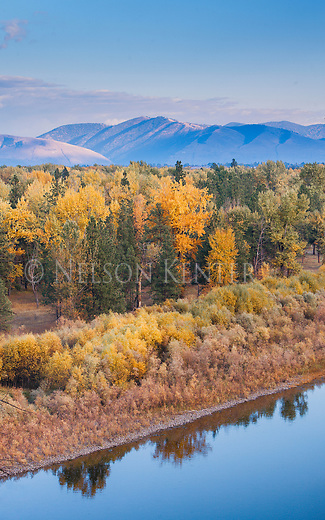 The Clark Fork River flowing through the cottonwood trees in fall color. West of Missoula, Montana