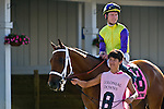 20 June 2009: Battle of Hastings (GB) ridden by Tyler Baze in the paddock before winning the Colonial Turf Cup (Gr II) stakes race. Battle of Hastings is owned by M. House and trained by J. Mullins.