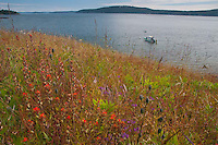 Yellow Island Preserve, San Juan Islands, Washington, US